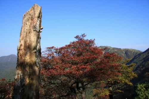 尊仏山荘の裏の紅葉