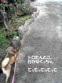 080315daichi.jpg