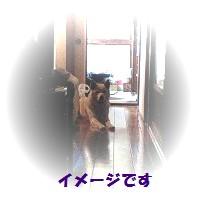 shiro053101.jpg