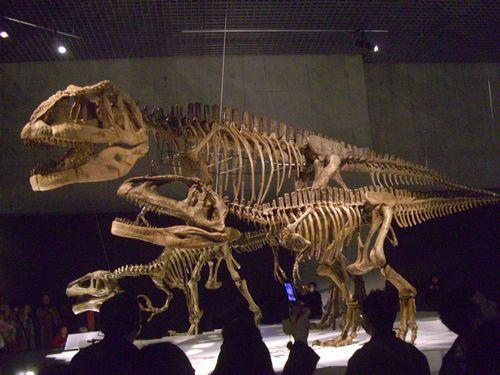 090315マプサウルス