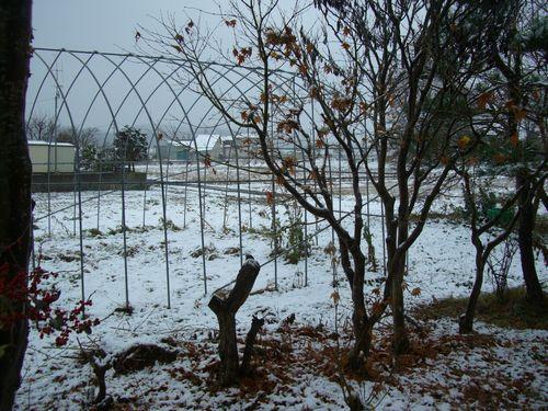 081119初雪①