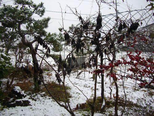 081119初雪②