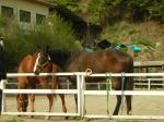 200705キャンプ場 馬