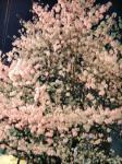 2008夜桜