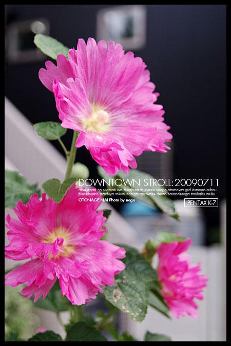 7IMGP0235.jpg