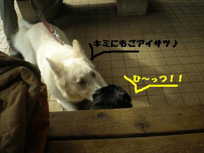 2008-11-01+018_convert_20081115213850.jpg