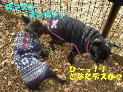 2008-11-01+049_convert_20081115215527.jpg