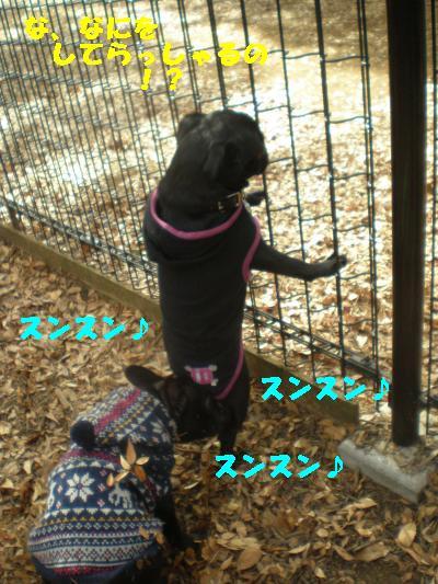 2008-11-01+050_convert_20081115215637.jpg