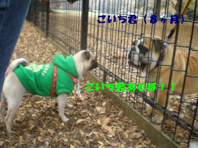 2008-11-01+089_convert_20081115221458.jpg