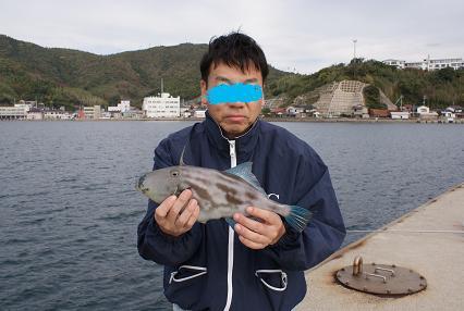 親父が釣ったウマヅラハギ