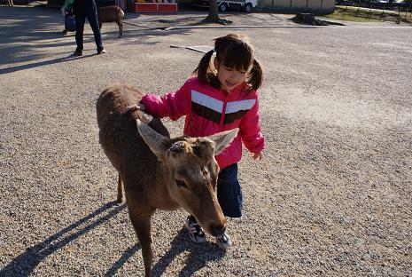 鹿ちゃん2