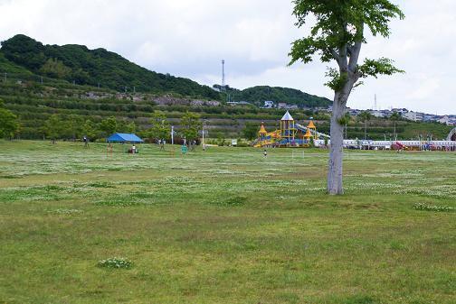 芝生広場と夢っこランド
