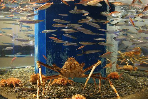 魚っ知館4