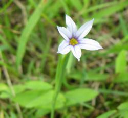 試し小さい花