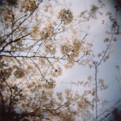 sakura200803_2