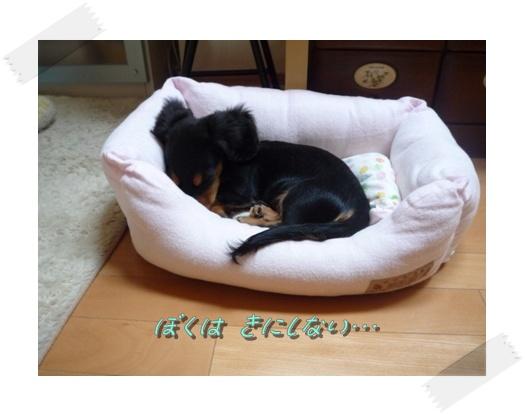 ぼくのベッド2。