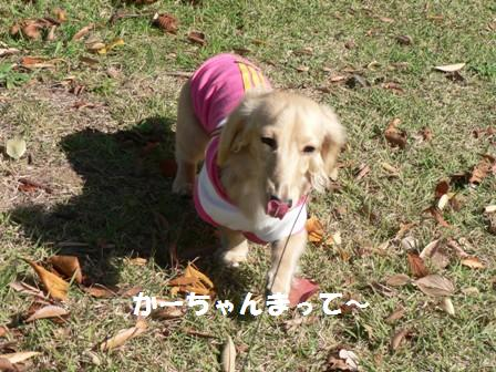 2008.11.19-6