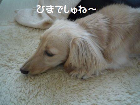 nana20090506-1