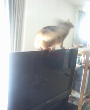テレビ前面