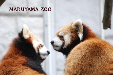 zoo15-13.jpg