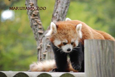 zoo15-14.jpg