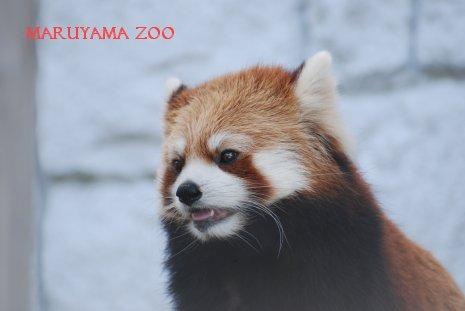 zoo15-15.jpg
