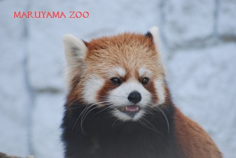 zoo15-16.jpg