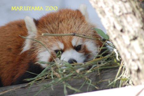 zoo15-17.jpg