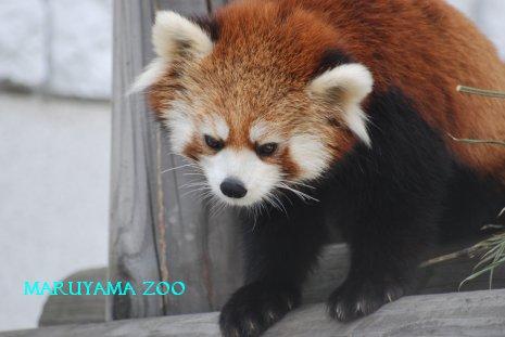 zoo15-18.jpg