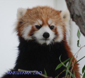 zoo15-21.jpg