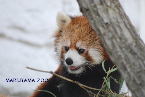 zoo15-22.jpg
