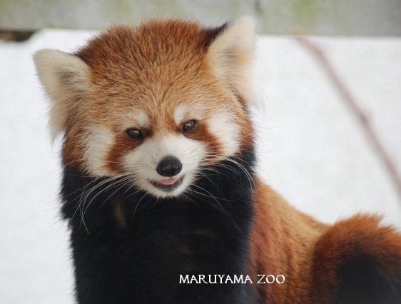 zoo15-24.jpg