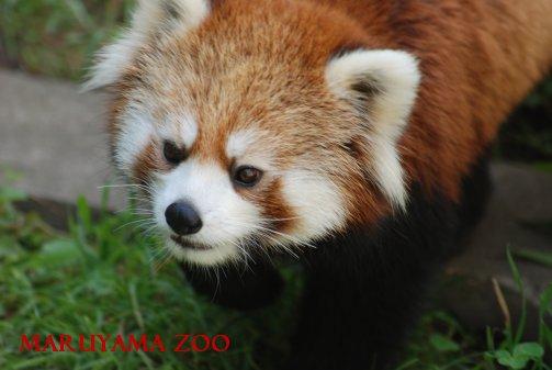 zoo15-26.jpg