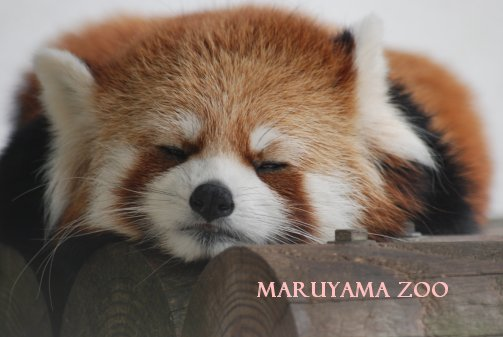 zoo15-27.jpg