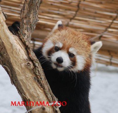zoo15-28.jpg