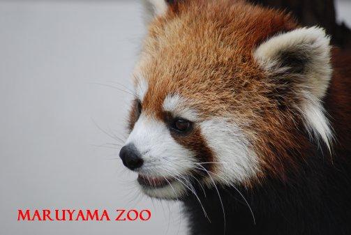 zoo15-30.jpg