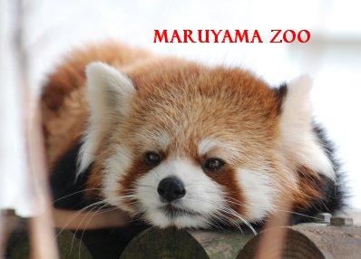 zoo15-31.jpg