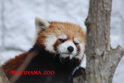 zoo15-32.jpg