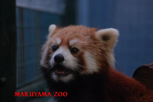 zoo15-33.jpg
