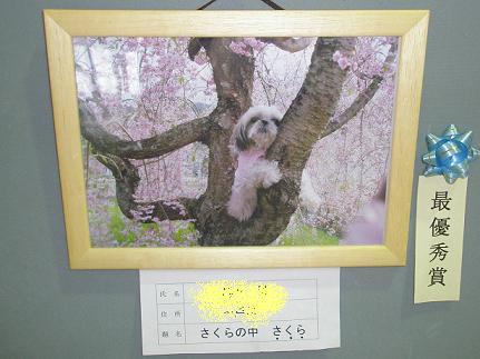 写真展2011最優秀賞