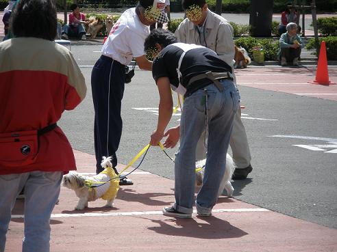運動会2011 お散歩
