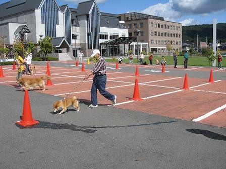 運動会2011 お散歩リレー1