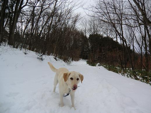 雪遊び01.11-1