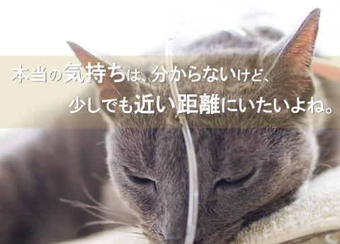 shi139t_top.jpg