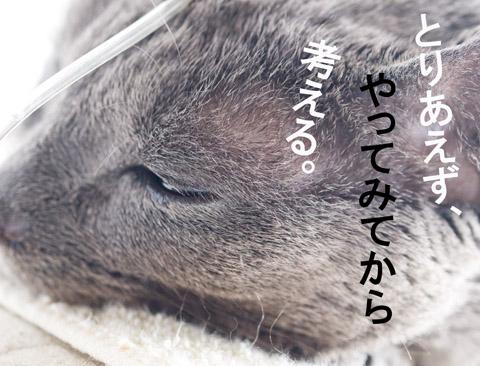 shi142t_top.jpg