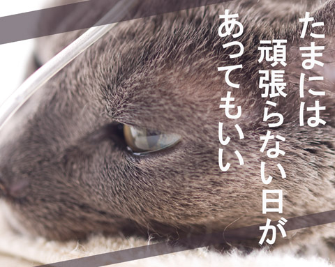 shi145t_top.jpg