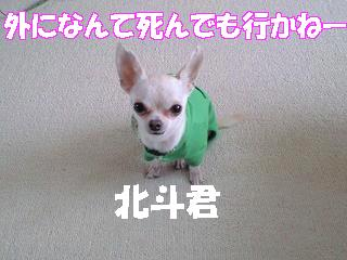 CA-hokuto.jpg