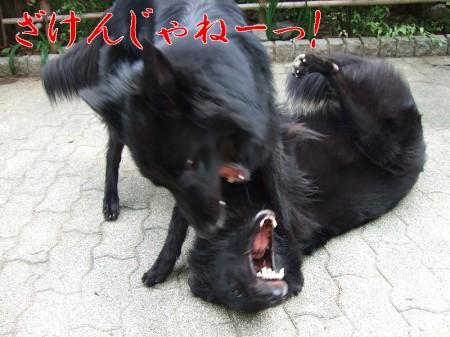 hanifura.jpg