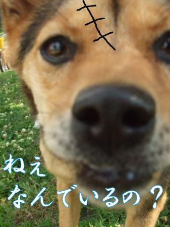 mameko.jpg