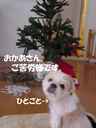 oji-tree.jpg